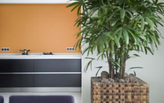 kamerplant in modern interieur
